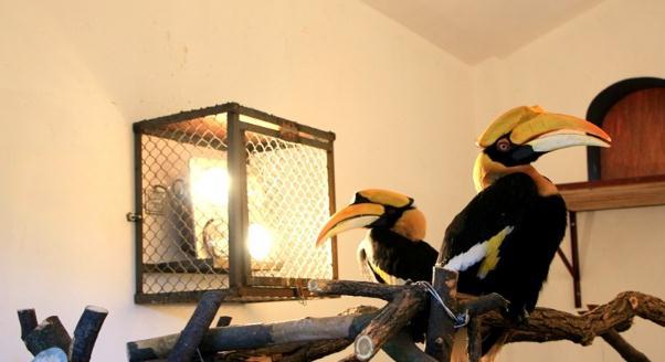 犀鸟在暖房中靠取暖灯避寒。