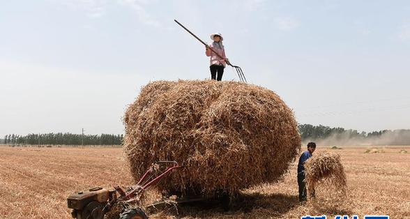 我国的粮食供需结构出了什么问题?