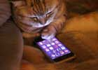 丢这么个东西寒碜我?!喵个,智障!    智能手机、平板电脑、电视、互联网……很少有人能够生活在没有它们的世界。那么,猫的世界是如何回应现代技术革命的出现呢?正如你所看到这些图片,猫猫都不知道该相信什么了。是老鼠或电脑配件?是一个毛线球还缠绕的电缆线?电视机变小了还是我变胖了?在电脑中的那些鸟好吃吗?现代技术对人类的影响估切不谈,喵儿们心理阴影面积一定不小吧。