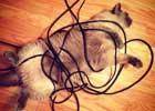 这冰冷又僵硬的东西让我快窒息啦!喵哩个毛线!    智能手机、平板电脑、电视、互联网……很少有人能够生活在没有它们的世界。那么,猫的世界是如何回应现代技术革命的出现呢?正如你所看到这些图片,猫猫都不知道该相信什么了。是老鼠或电脑配件?是一个毛线球还缠绕的电缆线?电视机变小了还是我变胖了?在电脑中的那些鸟好吃吗?现代技术对人类的影响估切不谈,喵儿们心理阴影面积一定不小吧。