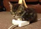 北方的供暖多棒啊,南方的取暖器,啧啧啧~    智能手机、平板电脑、电视、互联网……很少有人能够生活在没有它们的世界。那么,猫的世界是如何回应现代技术革命的出现呢?正如你所看到这些图片,猫猫都不知道该相信什么了。是老鼠或电脑配件?是一个毛线球还缠绕的电缆线?电视机变小了还是我变胖了?在电脑中的那些鸟好吃吗?现代技术对人类的影响估切不谈,喵儿们心理阴影面积一定不小吧。