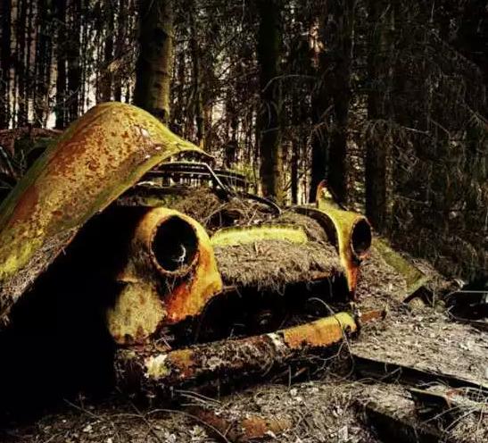 陈旧的汽车已经严重损坏,锈迹斑斑。汽车上压着厚重的枯枝败叶。但是这抹明亮的黄色,似乎还在提醒着人们它光辉的过去。