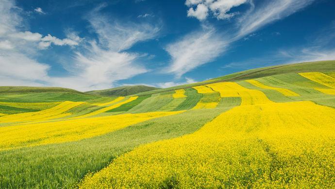 中央一号文件为何锁定农业供给侧改革