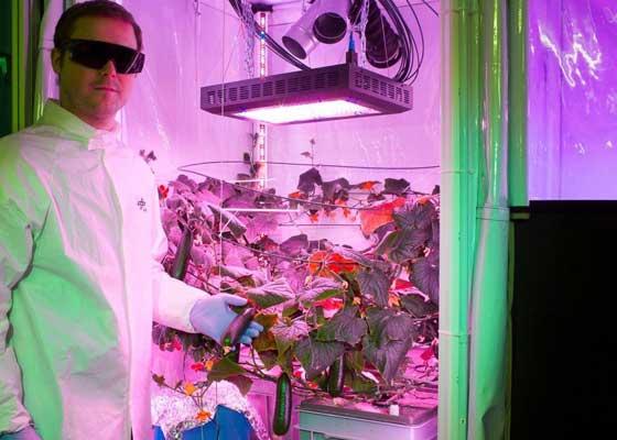 GAC的科学家Paul Zabel将随同这座农场一起前往南极洲,他将在42盏LED灯下栽培水果和蔬菜。