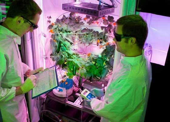 为了帮助植物茁壮生长,研究人员使用泵吸入了额外的二氧化碳,而且将温度设定在24摄氏度。