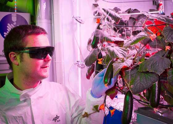 南极洲永不休止的冬天意味着那里的户外不可能长出食物。水果和蔬菜都是通过船从遥远的地方运送过去的,每年的运送次数也非常有限。但是德国航空航天中心(GAC)的工程师们将很快打造出一座高科技的农场,让南极洲也可以收获水果和蔬菜。这座农场将打造成一座全年候的温室,它将为在诺伊迈尔第三科学站工作的研究人员提供食物。这座农场被研究人员称为Eden-ISS(伊甸园空间),它将建造在一个气候受控的集装箱内。