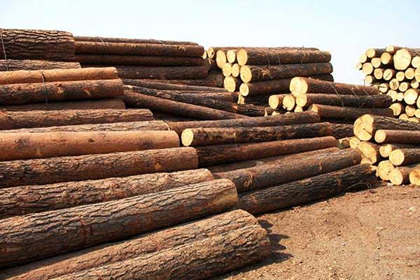 木材市场的这些变化趋势必须知道!