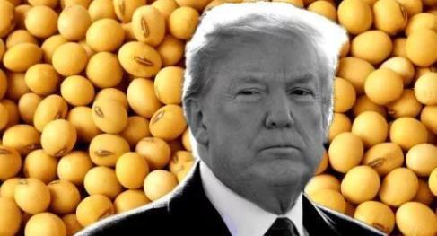 特写:播种时节美国豆农的忧与盼