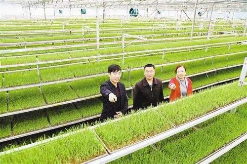 中办国办:通过政府购买 为小农户提供生产公益性服务