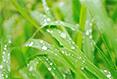 安徽四部门发文 鼓励采购人提出绿色采购要求